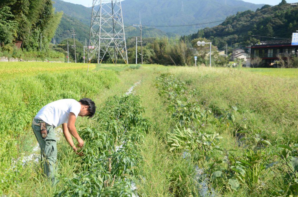 さまざまな新しい試みが行われている農園。毎年が試行錯誤の繰り返しです。